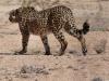Namibia 025
