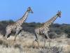Namibia 035