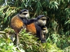Ruanda 017
