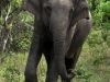 Sri Lanka 001