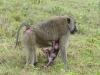 Tansania-032